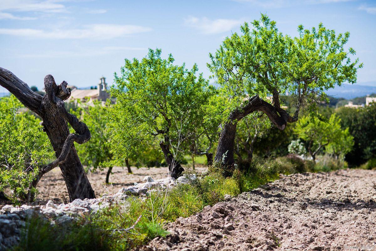Fotograf Thomas Weber aus Oldenburg: Making Of der Hochzeitsfotos auf Mallorca (32)
