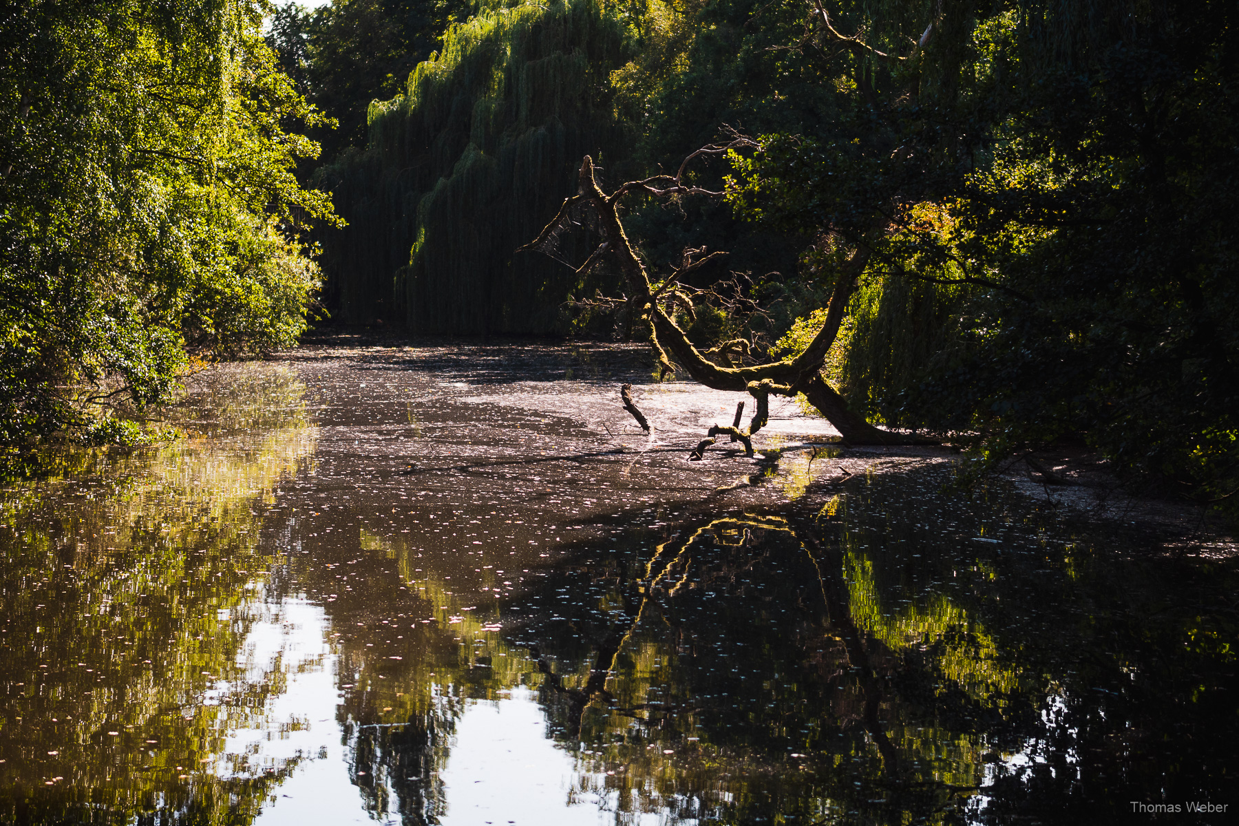 Natur an der Hunte in Oldenburg, Fotograf Thomas Weber